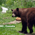 Kaslo, British Columbia, Canada is a small community on the shores of Kootenay Lake nestled on the banks of the Kaslo River. The community is in the centre of wilderness […]