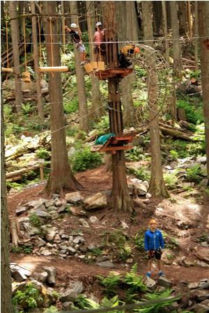 Tall Cedar Trees