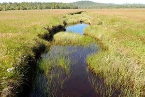 Hansen's Lagoon