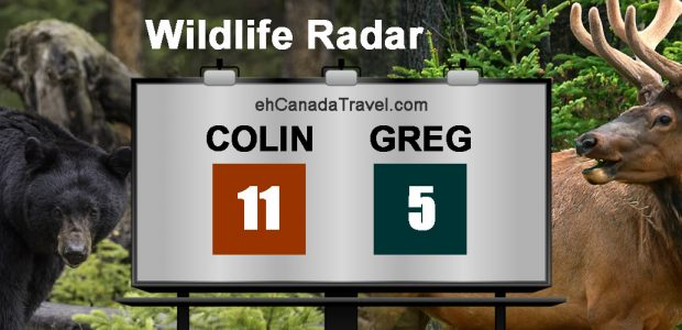 """Counting Wildlife Focuses Your Attention On Canadian Scenery """"Colin, has been spotting some big 3 pointers on this trip while I am nickle-and-diming it with 1 pointers. """" Everybody has […]"""