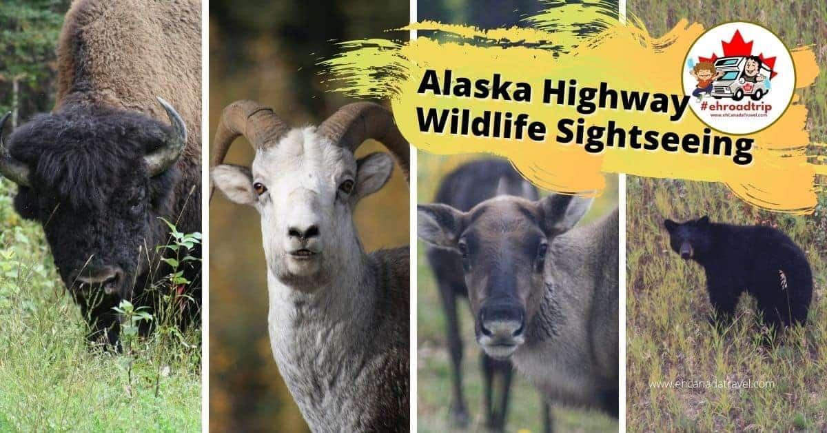 alaska highway wildlife sightseeing