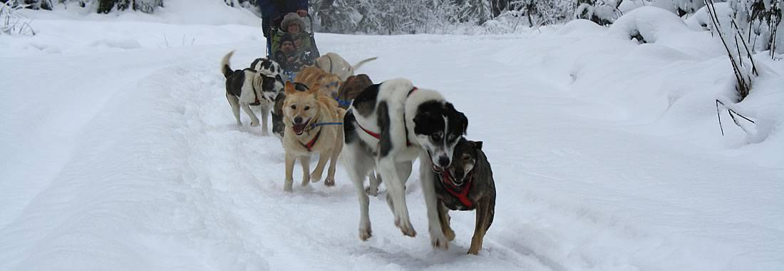 Dog Sledding in Revelstoke, British Columbia, Canada