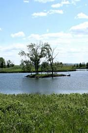 beatrice-wyndham-pond20090626_81