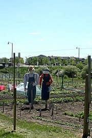 scarecrow-garden20090625_15