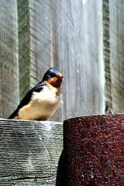 birds20090626_10
