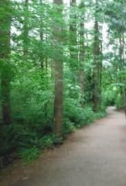 campbell-valley-regional-park
