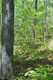 clayburn-creek-park