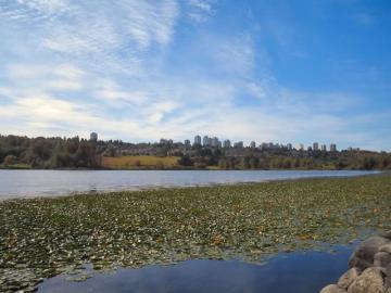 deer-lake