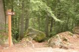 old-growth-trail