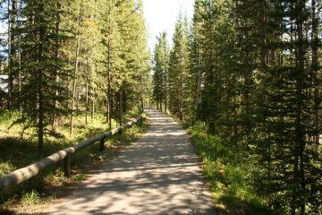 boulton-creek-loop-trail20090702_27