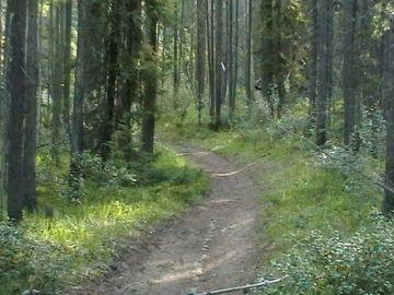 jasper_great_divide_trail_02