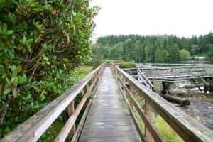 bamfield-boardwalk