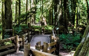 Cathedral Grove-MacMillan Provincial Park
