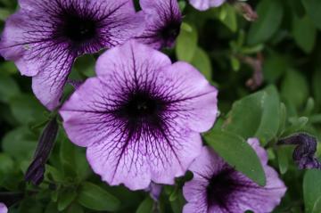 eleanor-kidd-gardens-flowers