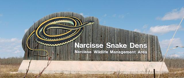 Narcisse Snake Dens Parks Trails Amp Places Interlake Region Manitoba Canada