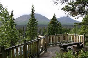 spruce-beetle-trail