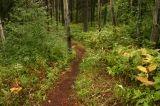 opal_trail002
