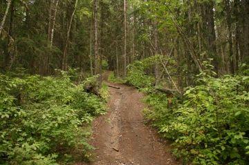 dickenson_trail