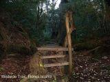 walk-the-wildside-trail