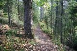 howe_creek_trail02