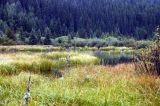 bullmoose_marsh02