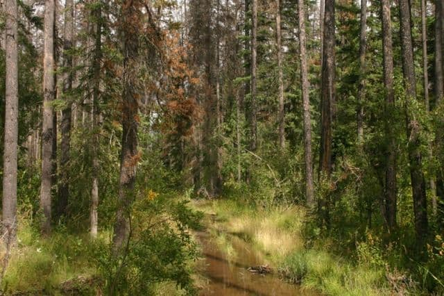 waterlily_trail2