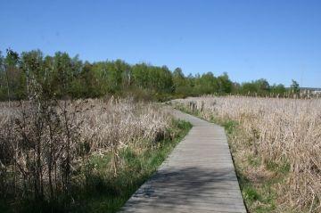 laurier_woods_trails_07