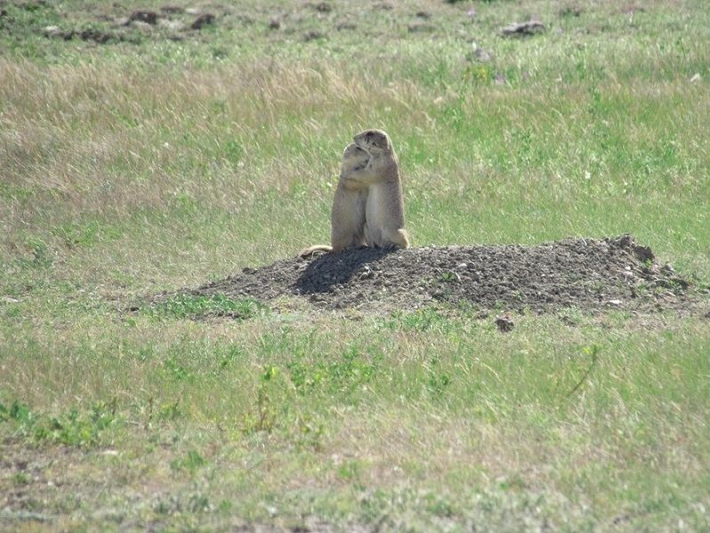 Where are all the prairie dogs?