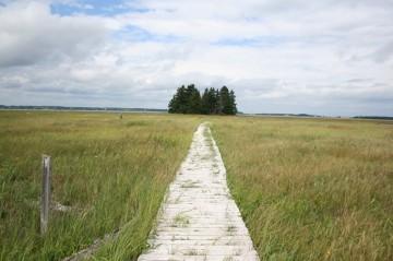 trail-boardwalk-warbler-trail20100809_11
