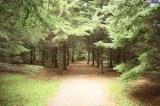 walking-path20100903_17
