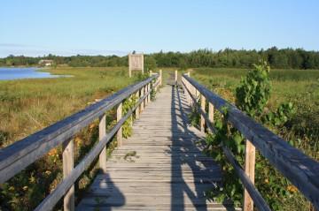 strawberry-marsh-trail-bridge20100814_02