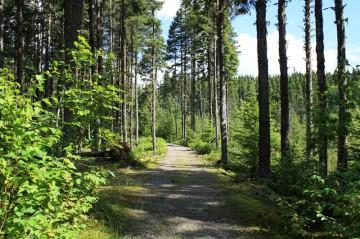 martin-trail20110824_28