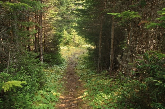 trail20110820_81