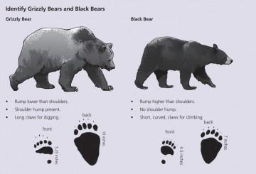 Be Bear Smart