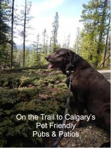 Pet Friendly Outdoor Pubs & Patios in Calgary