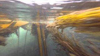 Kelp Reef Adventures 2015 - Kayak Vancouver Island