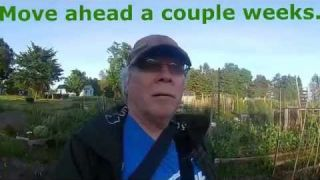 """""""I strapped my video camera on a butterfly"""" Thai Gardens by the lake"""