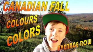 Canadian Fall Colors of the Gatineau Hills in Quebec and the Cat Cafe Chelsea Café Chat Sibérien