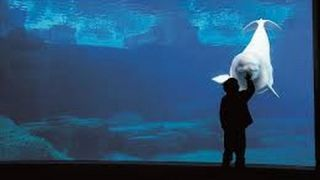 Incredible 360 video compilation at aquarium, amazing a must see wow caught on camera
