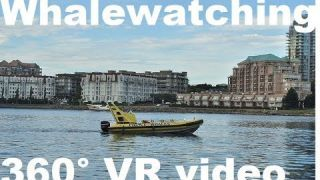 Whale watching tour in 4k 360 video for viewing in VR at Prince of Whales - by This Is Me In VR