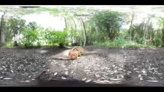 Animal Experiences by This Is Me in Virtual Reality 4k 360 video - YouTube