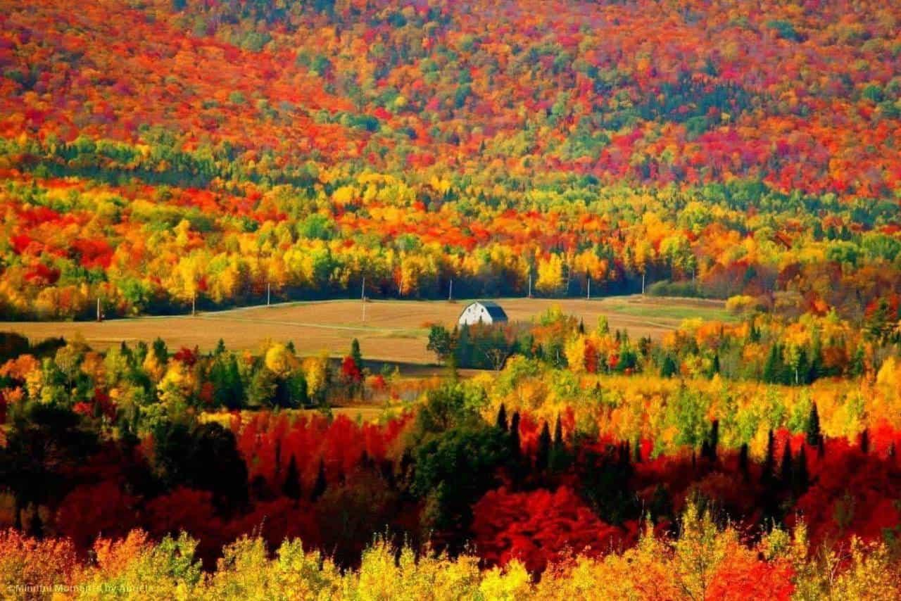 fall=photo