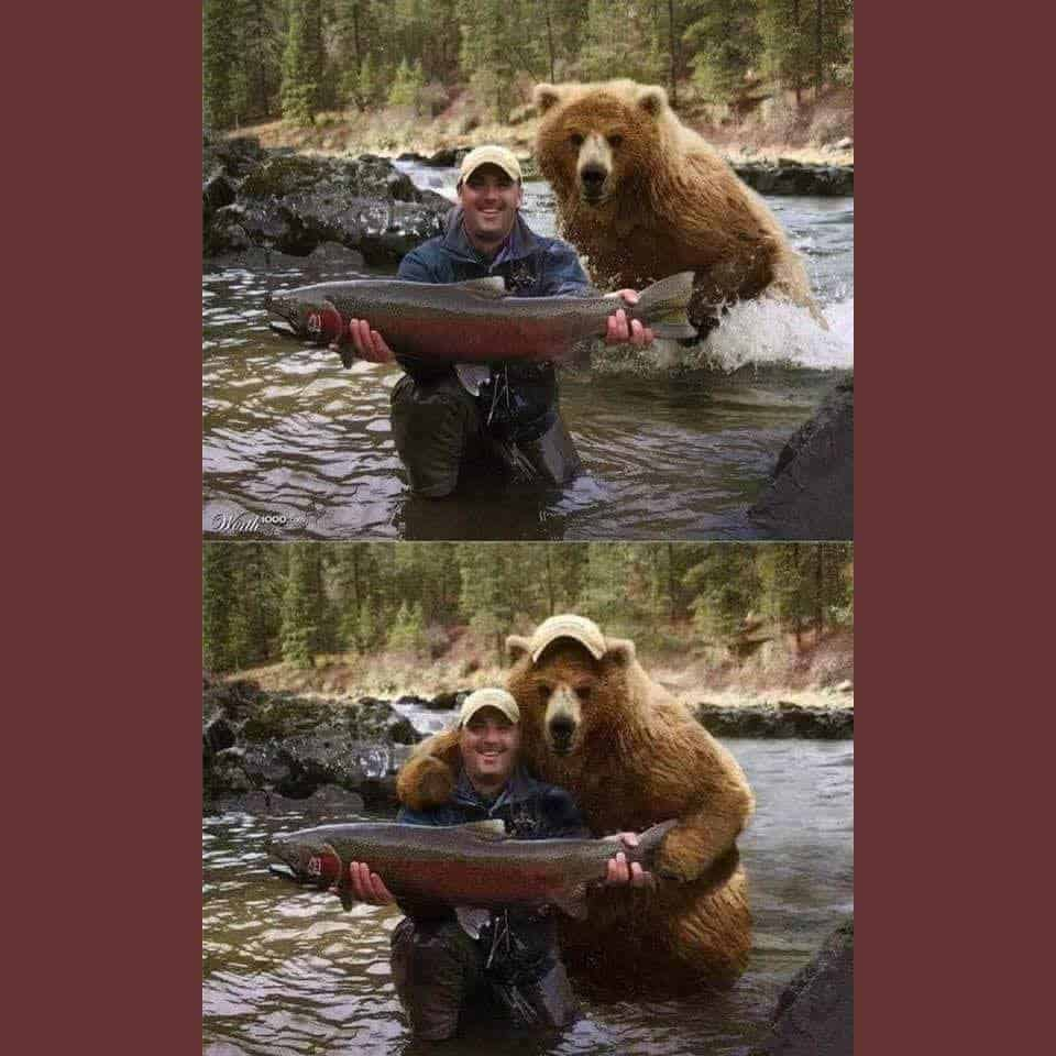 bearly fishing2