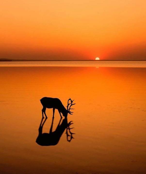 alberta-sunsets=elk