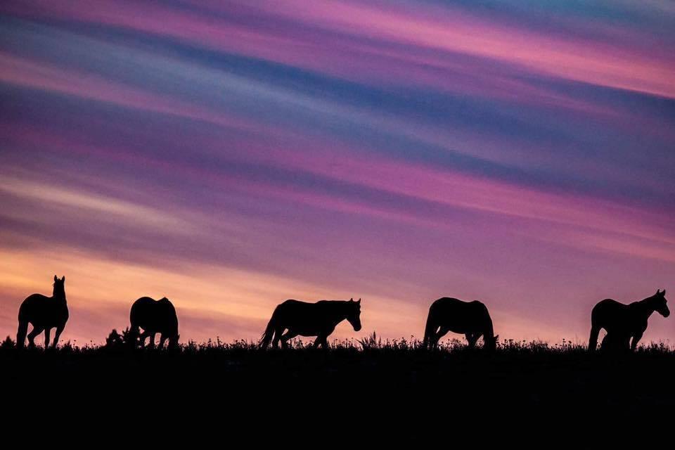 horse-sunset-merritt-douglas-lake-ranch