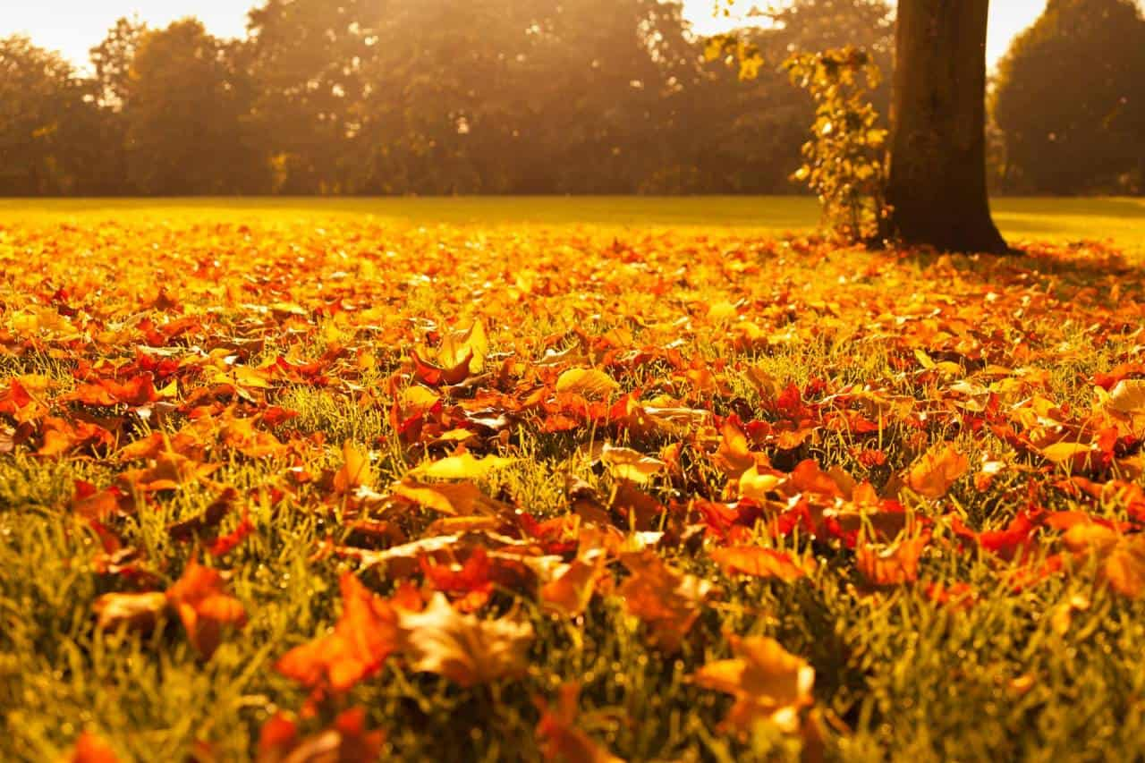 autumn-leaves-at-sunset