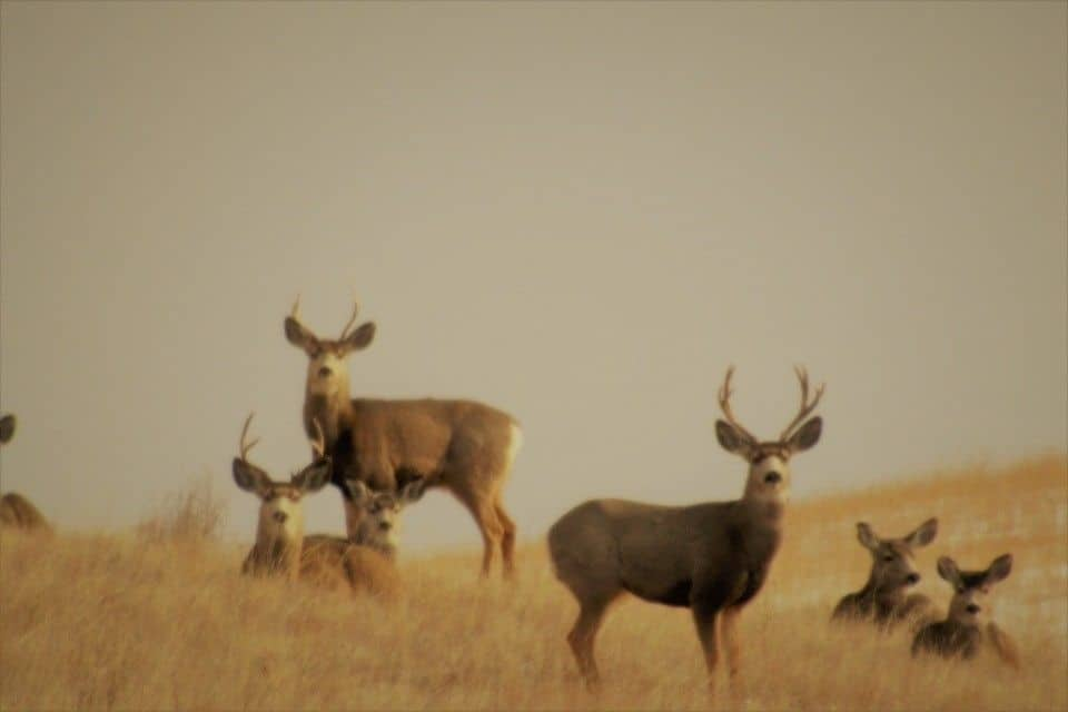 33029d635ad272d7dd905a4a.jpg - Grouping near Glentworth Saskatchewan.