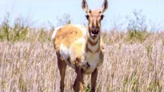 Fauna of SW Saskatchewan
