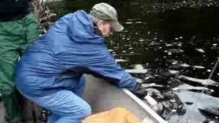 Walleye Fishing in Wawa Ontario